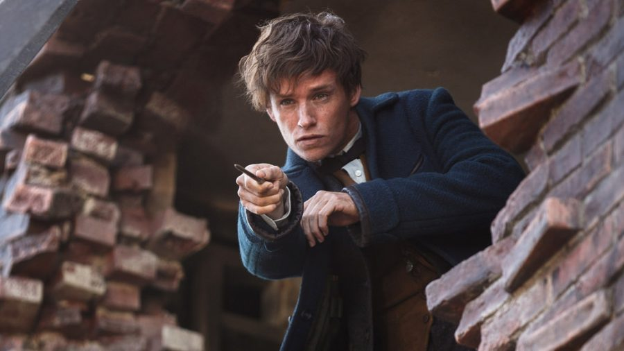 Newt+Scamander+%28Eddie+Redmayne%29+searches+for+magical+creatures.+