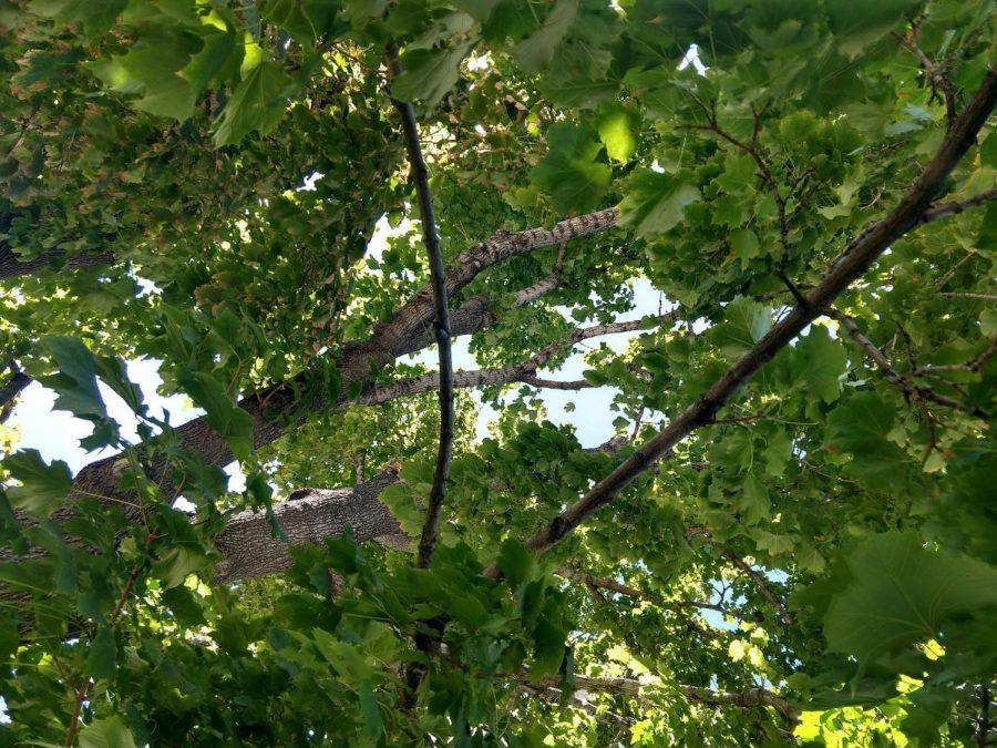 Poem: Leaves