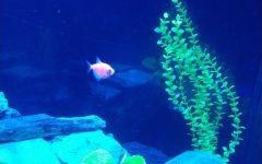Poem: Fish