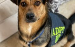 """Sister stands proudly in her """"Adopt me"""" vest in her foster family's home."""